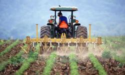 Atasi Krisis, Manfaatkan Pertanian dan Digitalisasi Desa