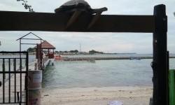 Lokasi Wisata di Kepulauan Seribu Disemprot Disinfektan