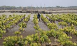 600 Ribu Hektar Hutan Mangrove Direhabilitasi