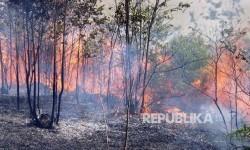 Kebakaran Hutan Paksa 2.700 Warga Prancis Mengungsi