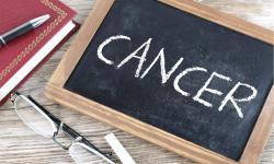 Makan Dua Jamur Sehari Pangkas Risiko Kanker 45 Persen