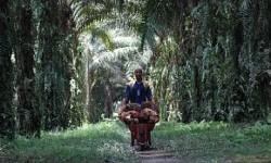 SPKS Ingin Reposisi Kemitraan Petani dan Perusahaan Sawit