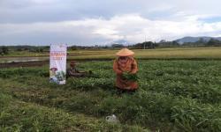 Petani Binaan Rumah Zakat Panen Kangkung