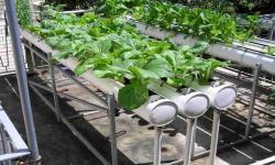 Urban Farming Diminati Warga Surabaya saat Pandemi
