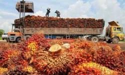 Mahathir Enggan Balas Boikot Minyak Kelapa Sawit India