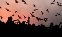WHO Serukan Larangan Jual Hewan Liar di Pasar Tradisional