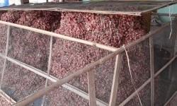 Kementan Tahan 36 Ton Bawang Merah Ilegal Asal Malaysia