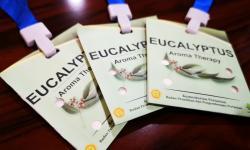 Prototipe Antivirus Eucalyptus Diuji ke 16 Pasien Covid-19