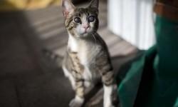 Petugas Damkar Evakuasi Kucing di Celah Rumah
