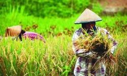 Kementan Ingatkan Petani Percepat Musim Tanam Tahun Ini