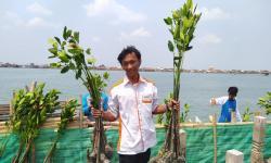 Selamatkan Warga Pesisir Demak, satu Juta Mangrove Ditanam