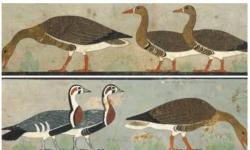 Ilmuwan Ungkap Misteri Lukisan Kuno di Mesir