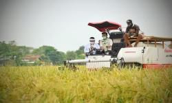 Panen Perdana, Petani Nikmati Tingginya Harga Gabah