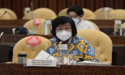 Ini Alasan Indonesia Akhiri Kerja Sama REDD+