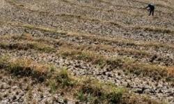 BMKG: 30 Persen Wilayah akan Alami Kering Lebih dari Normal