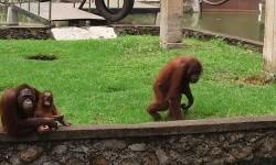 Taman Satwa Cikembulan Jaga Prokes Agar Aman Dikunjungi