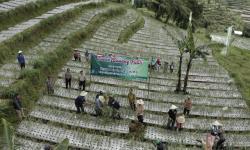 Panen Bawang Putih Lokal Belum Bisa Terserap Pasar