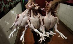 Satgas Pangan Ungkap Penyebab Fluktuasi Harga Ayam