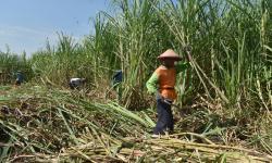APTRI: Pasokan Gula di Jawa Timur Masih Mencukupi