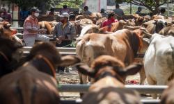 Penjualan Hewan Kurban di Depok Alami Penurunan