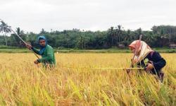 Pemerintah Daerah Sadari Peran Vital Penyuluh Pertanian