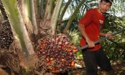 Penjualan Naik, SMART Bukukan Laba Bersih Rp 250 Miliar