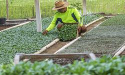 Jokowi Ingin Pandemi Jadi Momentum Transformasi Ekonomi Desa