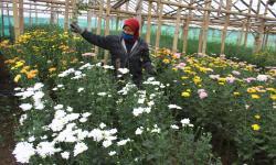 Petani Ikuti Pelatihan dan Pengembangan Produk Teh Krisan