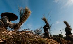 Menko Perekonomian Optimistis Pertanian Terus Tumbuh Positif