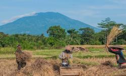BI: Perekonomian Banten Tumbuh Membaik