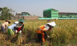 Universitas Dukung Kementan Kembangkan Diversifikasi Pangan