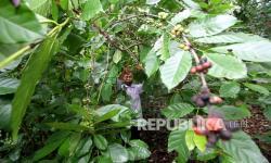 Jasa Marga Berikan Program Bantuan Produksi Kopi