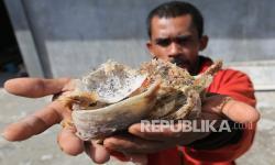 Ekspor Mandek, Pengusaha Sarang Burung Walet Mengadu ke KSP