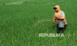 KTNA: Bukan Hilang, Kuota Pupuk Bersubsidi Terbatas