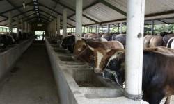Pemerintah Harus Kembangkan Sistem Peternakan Berkualitas