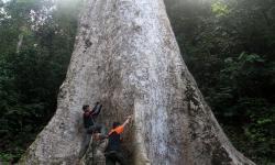 KLHK Dukung Pemanfaatan Hutan Rakyat untuk Kesejahteraan