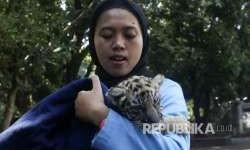 Kebun Binatang Bandung Bersiap Buka di Masa <em>New Normal</em>