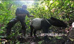 In Picture: Pelepasliaran Satwa di Taman Nasional Kerinci Seblat
