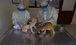 Apa Kucing dan Anjing Butuh Vaksin Covid-19?