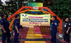 Jakarta Utara Panen Hasil Walkot Farm