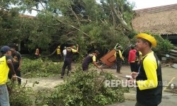 Hampir Seribu Pohon Rawan Tumbang Dipangkas di Jakpus