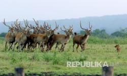 In Picture: Dampak Pandemi di Taman Nasional Baluran