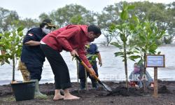 Jokowi Ingatkan Kewajiban Menjaga Mangrove
