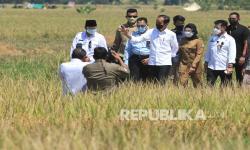 In Picture: Jokowi Hadiri Panen Raya di Indramayu