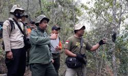 Lutung Jawa di Malang Dibantai Pemburu