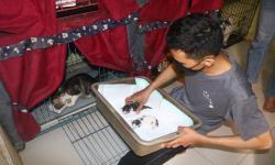 Jasa Penitipan Kucing di Malang Mulai Ramai Dikunjungi