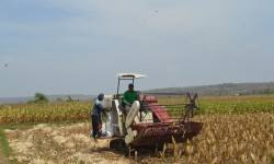 Petani Sulbar Butuh Alat Pertanian