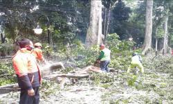 Pemkot Bogor Pangkas Sejumlah Pohon untuk Cegah Tumbang