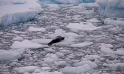 Kebakaran Hutan Pernah Terjadi di Antartika 75 Tahun Lalu