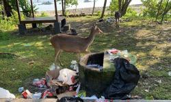 Satwa Makan Sampah, KSDA Pangandaran Berikan Penjelasan